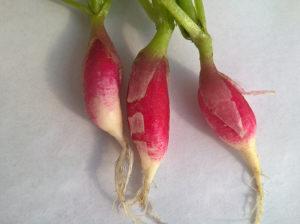Francia retek - Bébi zöldség