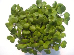 Retek - Mikrozöldség