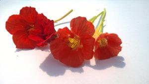 Sarkantyú - Virág